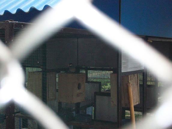 Burung gelatik untuk Konservasi burung endemik universitas brawijaya